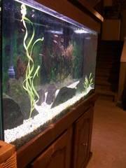 72 Gal Aquarium